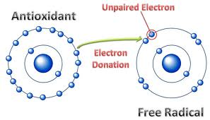 antioxidants donate their own electrons to other molecules