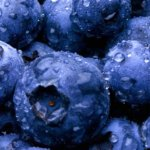 bluberries and bilberries for diarrhea