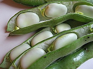 fava beans or broad beans