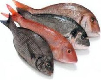 four types of fish