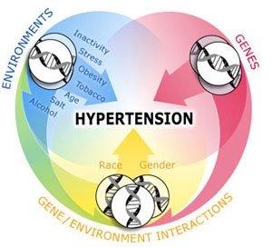 causes of high blood pressure, Skeleton