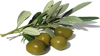 olives and olive branch