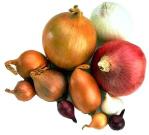 different types of onions