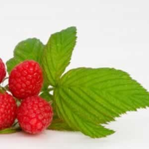 raspberry leaf for diarrhea